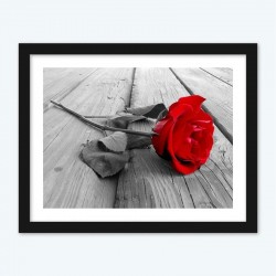 Red Rose Kissing