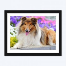 Beautiful Dog Rough Collie Breed