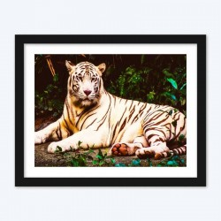 Stunning White Tiger Laying by the Forest