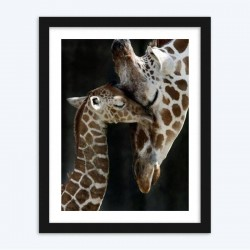 Cute Baby Giraffe and Mother