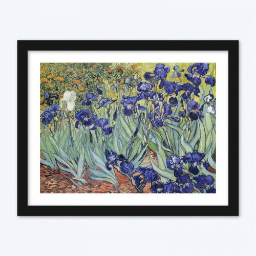 Irises  Art Kit
