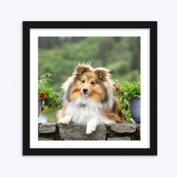 Amazing Dog Diamond PaintingSheltie Schilderijen Breed